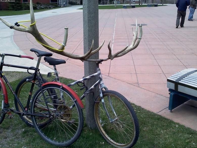 Pimped bike. . Kuvasz) N. cam. 8/10 would ride into battle