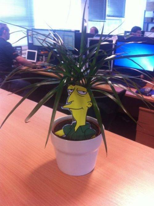 Plant Cosplay. .