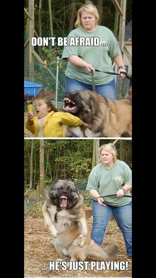 Playful dog. .