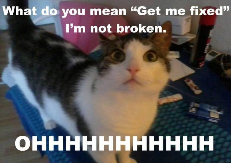 "Please don't do this to me !. My kitty :o). What_ d, o you mean ""Get me fixed"" Pm not broken."