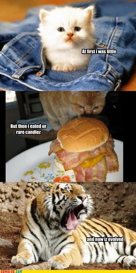 "Pok'e'kitty. . Mira! iras little"" Mt than i stated m rate can Ilia:. OMG that burger looks so goddamn good... lol"