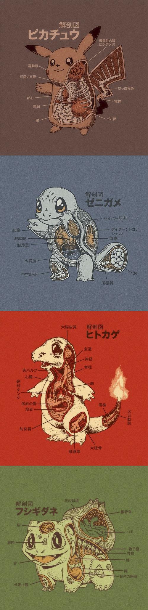 Pokemon's anatomy. .. Needs more English.