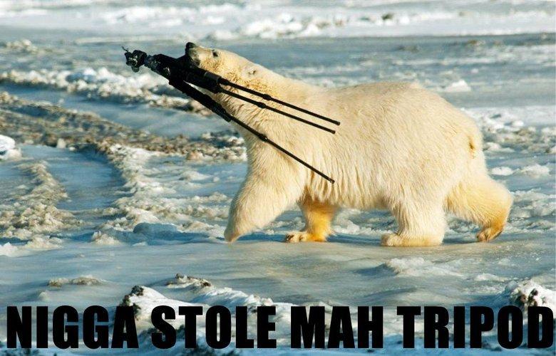 Polar Bear. A polar bear stealing. My friend made this so credit goes to him.. Polar Bear stealing