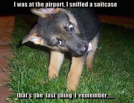 Police Pup. .. got milk bwahhaha