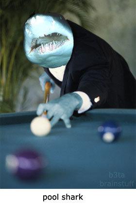 Pool Shark. . pun! shark