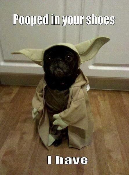 Pooped in your Shoes. . Illia WEBB illillillillillill Yoda Dog pooped FUNNYJUNK