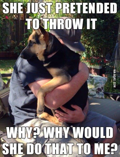 Poor doge. . y u do dis