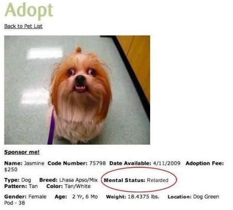 Poor Jasmine. . lama: Jasmine End: Number: 15195 Data in Adoption Fan: Tim Dog Hamill Intuit . Fathom: Tun calm: Ttm/ White