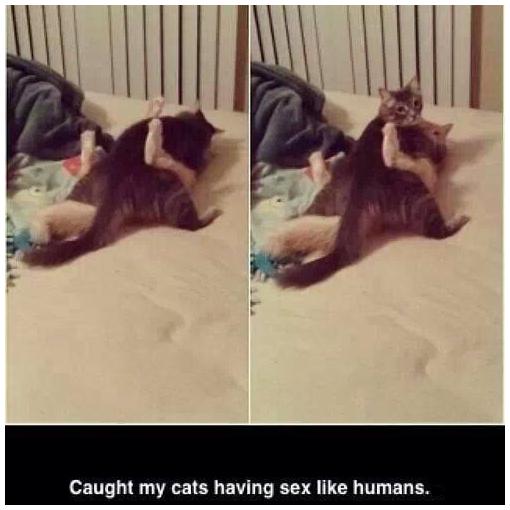 not caught