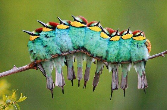 Post YFW.. Nope, not a caterpillar, a line of European Bee-eaters. Cute, or what?.. Mfw Birds caterpillar Cute mindfuck