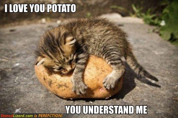 Potato. Not OC found on stoned lizard.. In F. POTATOES RULE!!