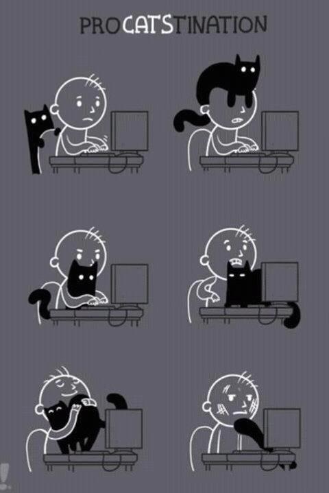 Procatstination. .. Feelsexplain