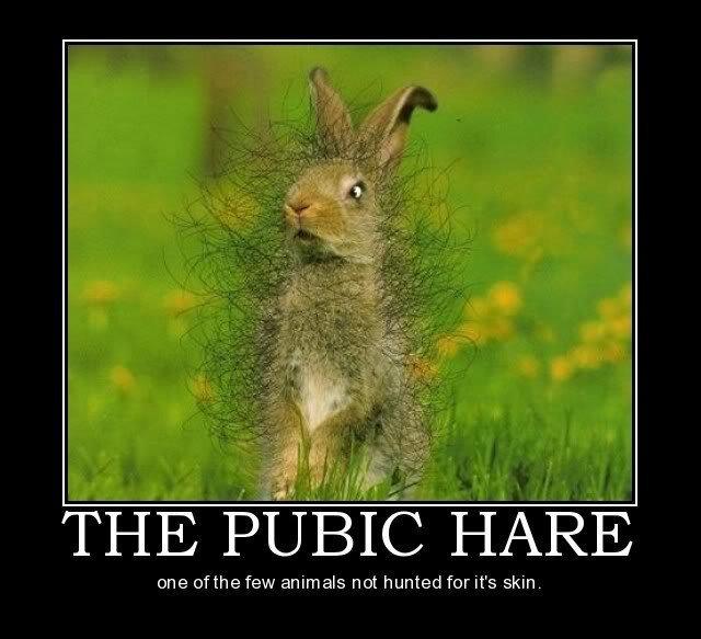 Pubic Hare. . pubic hare Rabbit animal pubes