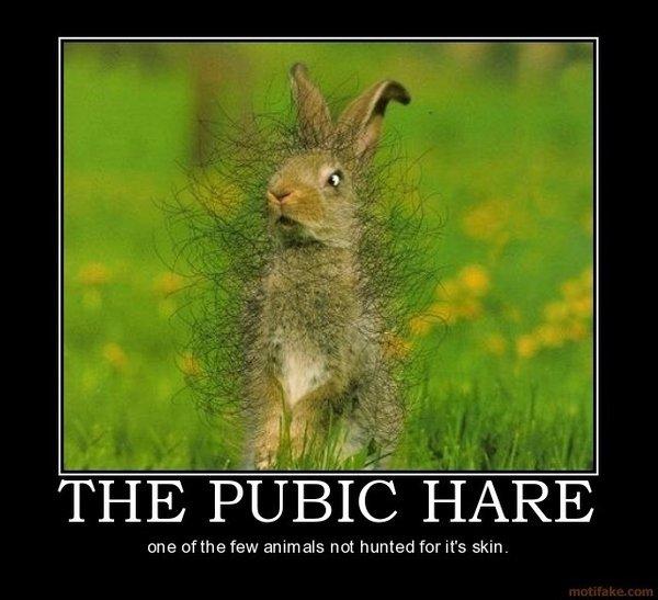 Pubic Hare. . Itoi E one tithe few animals nut hunted far it' s Ta' pubic hare