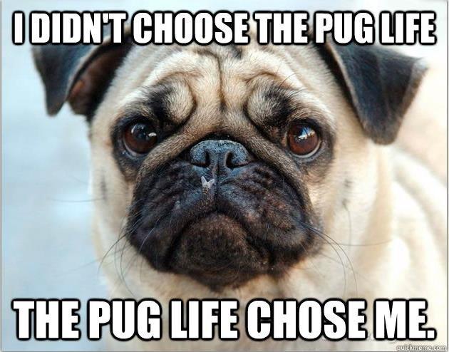 Pug Life. .