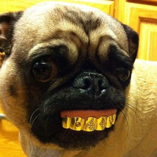 Pug Life. .. pug grills.......................oh god