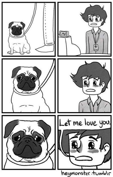 Pugs. .