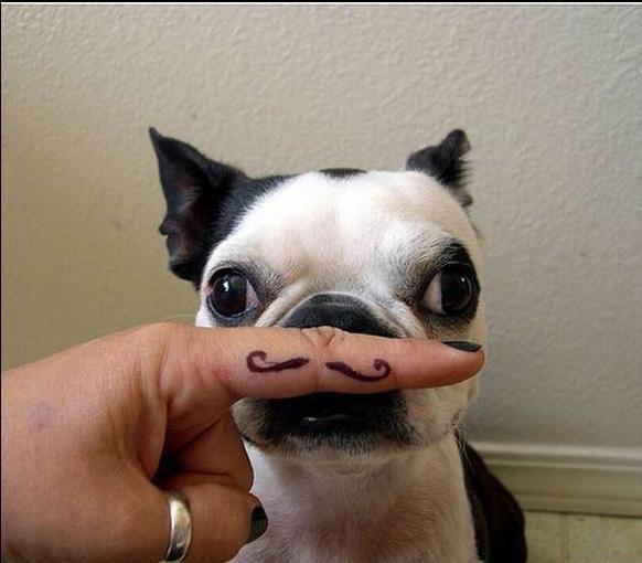 Puppy Mustache. .. Le derp
