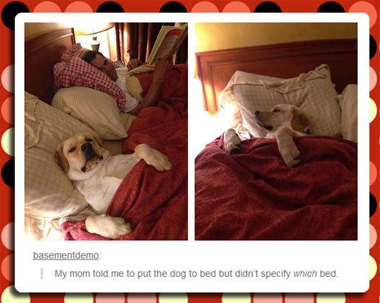 """Putting The Dog To Bed. Putting The Dog To Bed isfunny.net/funny-little-brother-idiot-pic/. My! '@lla """" R put the ilia } Berti limit didn' t .UGW, trad. funny"""