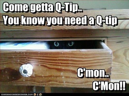 Q-tip. Ninja cat attacks!. save me from Evil Ninja cat