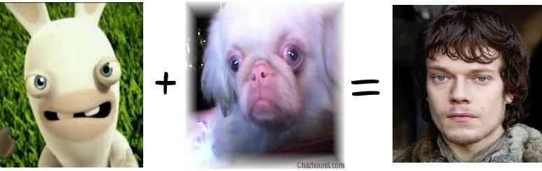 Rabbit + Retarded Puppy = Theon Greyjoy. Enjoy! -Nina AKA Pinkysfarm.