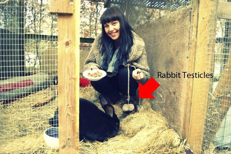 Rabbit Testicles. .