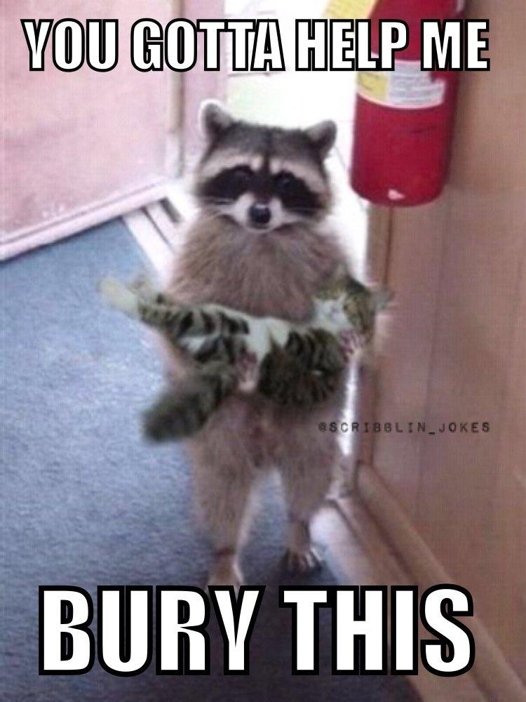 raccoon in need of assistance. . BURY THIS meme funny Raccoon help MEMES
