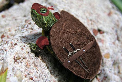 Real life Ninja Turtle. .