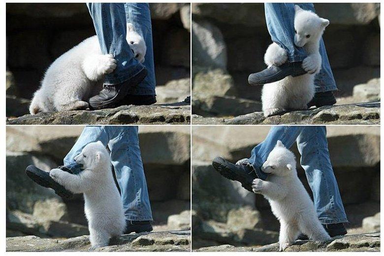 Real polar bear attack in alaska. .. skittles heart att- HHHRRRRNNGGGGGG