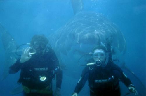 Really Big Shark. .. SWIM PEOPLE SWIM!! Animals Shark