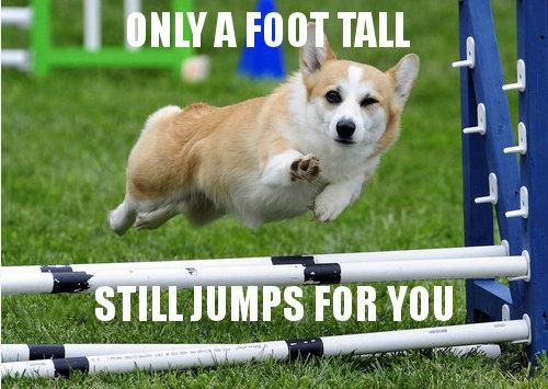 "Ridiculously Photogenic Dog. corgi gonna corg. FOB Will "" youre not good e"