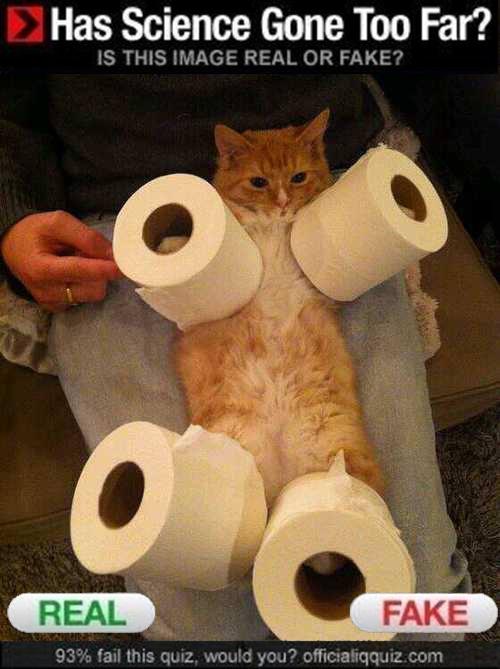 Rocket Cat. . Has Science Gone Too Far?. Lieutenant Dan, you got new legs!