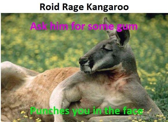 Angry kangaroo