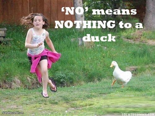 Rude duck. Not OC.