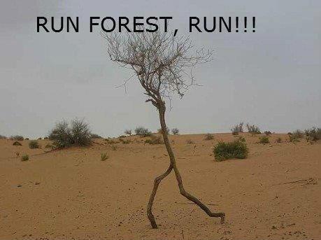 Run%20forest%20run%20you%20lost%20someth