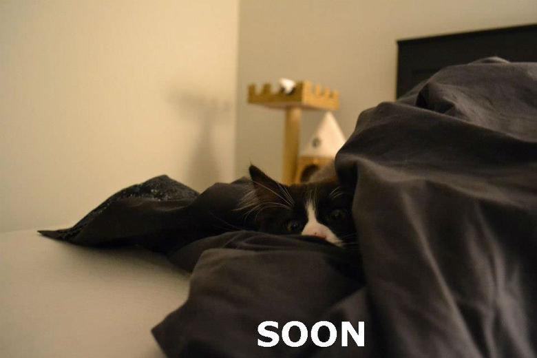 SOON. SOON.. soon