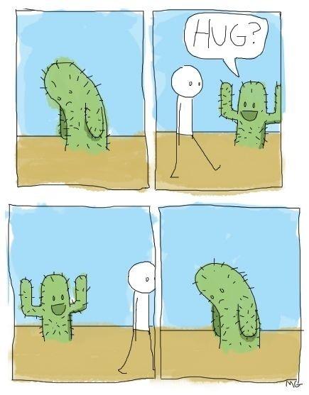 Sad cactus. A sad cactus.