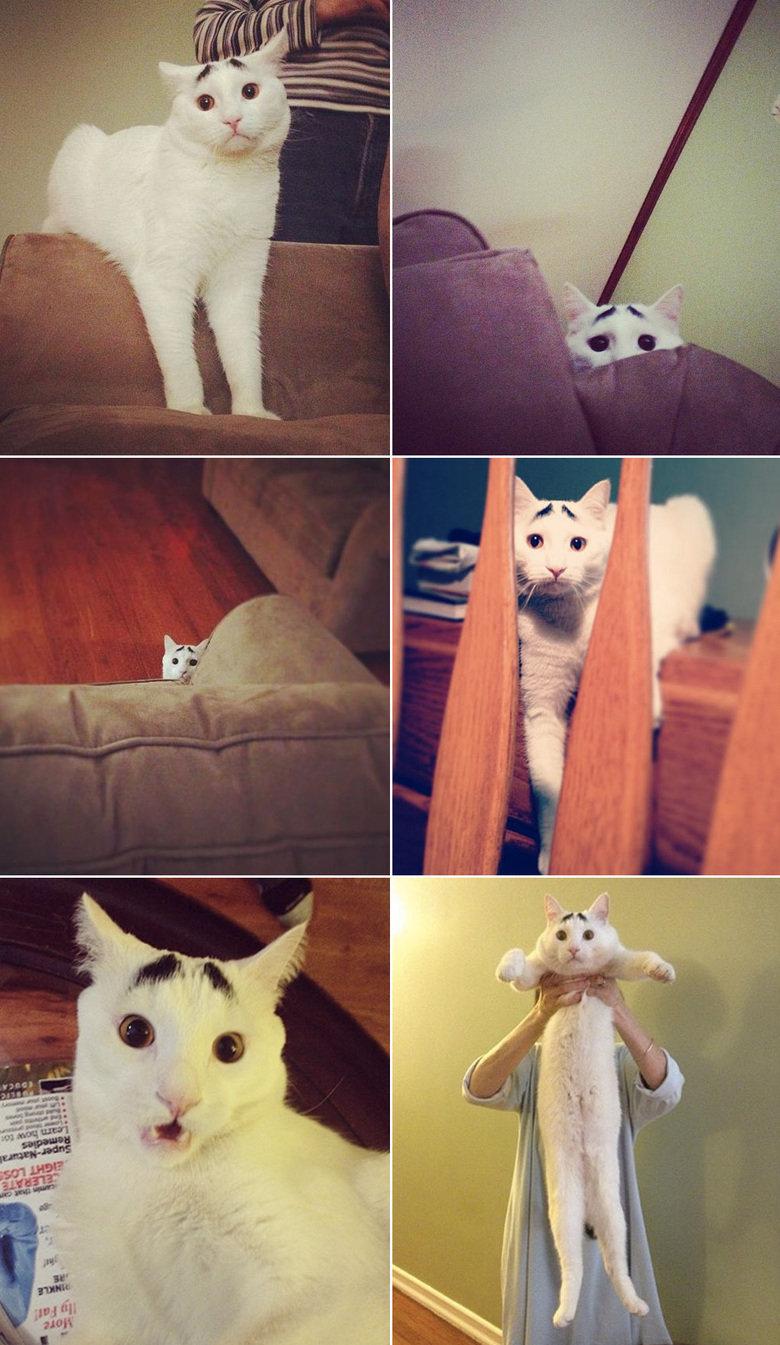 Sam the worried cat. >:|.. tnaw sam the worried