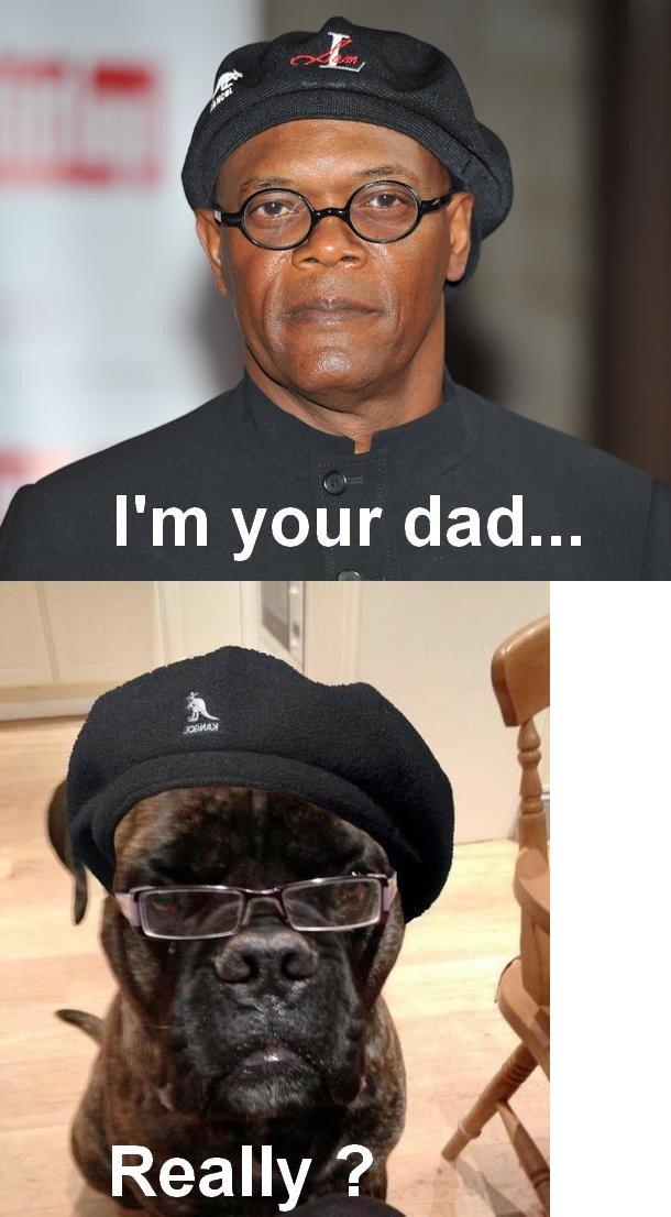Samuel L Dogson. .. A black guy claiming to be someones father ? I call . Dog glasses samuel l jackson Dogson same