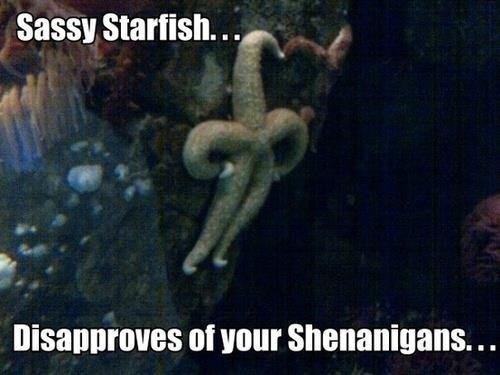 Sassy starfish. . sassy Starfish. . my at your Shenanigans. . .. Saved