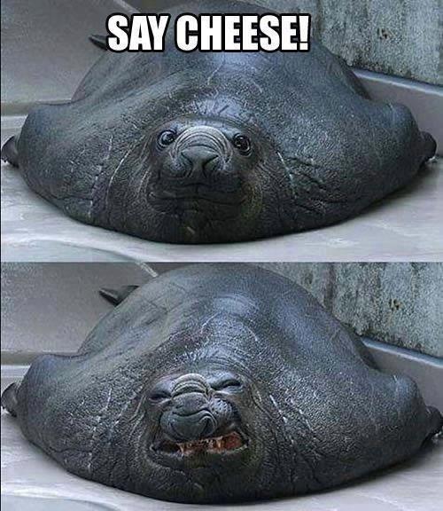 Say Cheese!. .