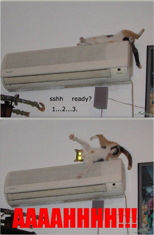 SCARED CAT. LOLZ!.. IMMA FIRIN MA.... you choose START A COMBO lol funny WTF epic Scared cat