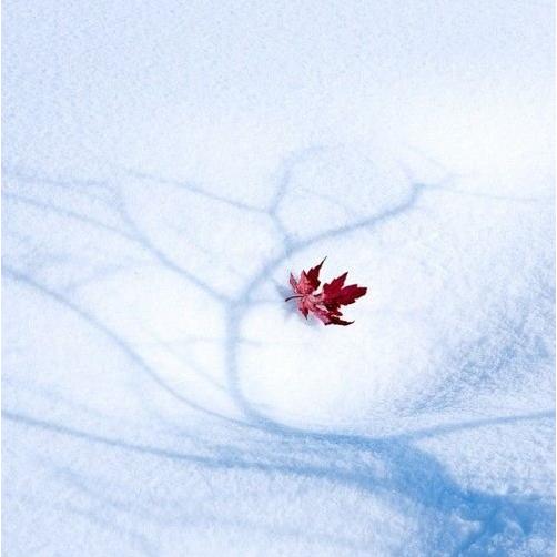 scenery. Beautiful scenery in winter. nice