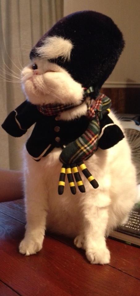 Scottish cats. Like owner like cat.. God damn Scots! They ruined Scotland!