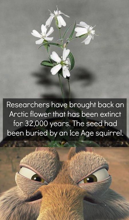 Scrat is not happy…. Scrat is not happy… geniusquotes.net/secret-of-change-socrates-quotes/. Researchers have brought beck en Arctic flower than has been extinc funny