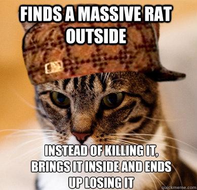 Scumbag Cat. First OC I've uploaded in a long time.. I: _ IRS A MASSIVE mu