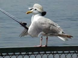 Seagull Fun. Seagull Fun. Seagull Fun