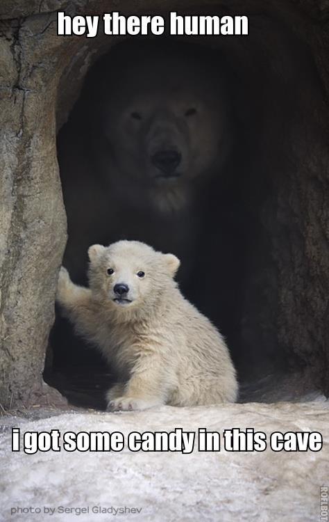 seems legit. . HEY human Polar Bear Bear sergel gladyshev Cave