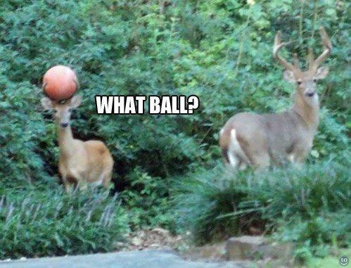 Seen my ball?. . Milt' f