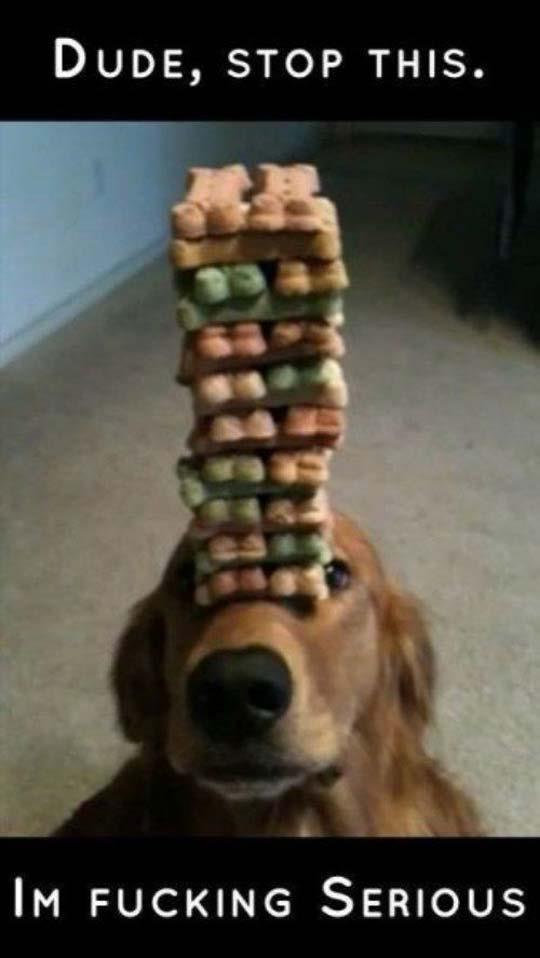 Serious dog is serious. Desc. Duos, STOP THIS. Ira SERIOUS d